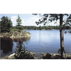 Environmental Graphics Lake in the Woods Wall Mural